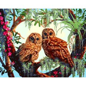 GХ4643 картина по номерам Две совы, 40х50 см