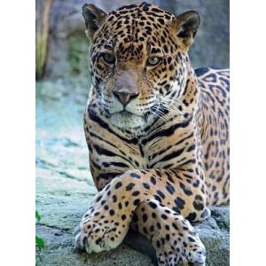 """GX5595 """"Леопард со скрещенными лапами"""", 40х50 см"""