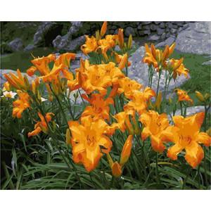 GХ4530 картины по номерам Желтые горные лилии  40х50 см