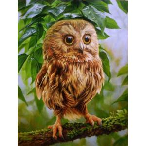 R2376 Картина по номерам маленькая сова 40x50 купить в Тутаеве недорого