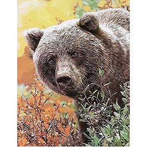 gx8920-Бурый медведь 40х50 см купить в Омске недорого