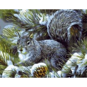Q1133 Картина по номерам белка крадет орехи 40x50 см купить в Омске недорого