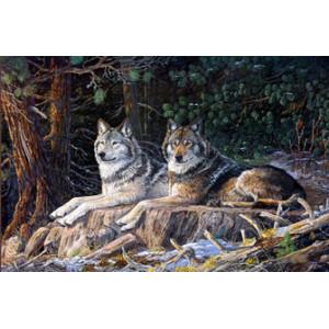 Q1924 Картина по номерам пара лежащих волков 40x50 купить в Омске недорого