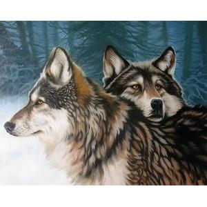 Q2248 Картина по номерам волки 40x50 купить в Омске недорого