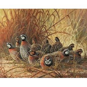 Q2276 Картина по номерам птицы в траве 40x50 купить в Омске недорого