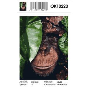 OK10220 Обезьяна в листьях картина по номерам 40х50