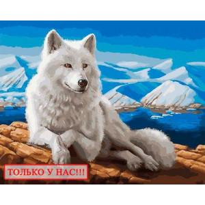 Картина по номерам 40х50 GX 29559/OK 10546 Эксклюзив!!! Белый волк