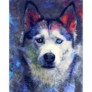 Картина по номерам 40х50 GX 30357 Цветной хаски 40x50 см