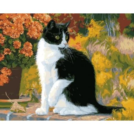 "GХ21870 Картины по номерам ""Черно-белый кот"", 40х50 см"