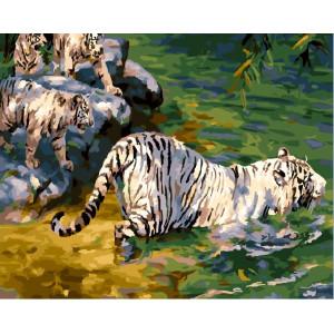 """GХ23997 Картина по номерам """"Тигры у воды"""", 40х50 см"""