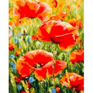 """GХ24017 Картина по номерам """"Степные маки"""", 40х50 см"""