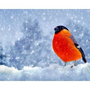 "GX24585 ""Снегирь на снегу"", 40х50 см"