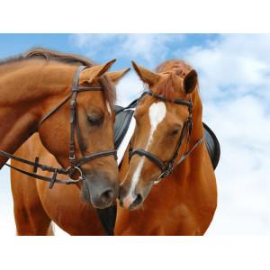 """GX24588 """"Две рыжих лошади"""", 40х50 см"""