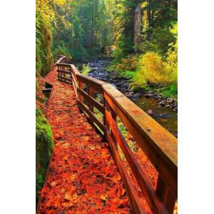 """GX24599 """"Деревянный мостик вдоль реки осенью"""", 40х50 см"""