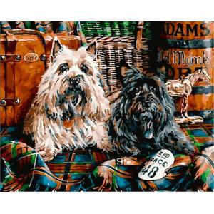 "GХ25553 Картина по номерам ""Шотландские терьеры"", 40х50 см"