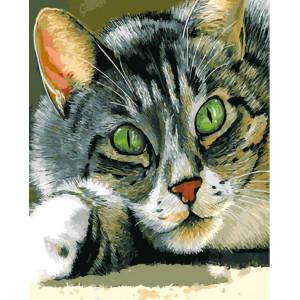 "GХ25564 Картина по номерам ""Зеленоглазый кот"", 40х50 см"