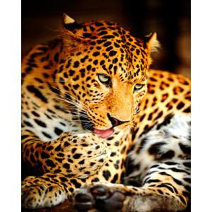 Картина по номерам 40х50 GX 26054 Леопард