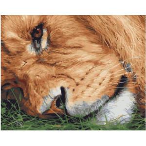 "GХ21255 Картины по номерам ""Лев на траве"", 40х50 см"