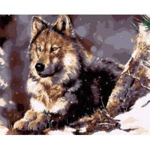 """GX22120 """"Волк лежит и смотрит вдаль"""", 40х50 см"""