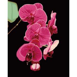"GХ3925 ""Розовая орхидея на черном фоне"" , 40х50 см купить в Омске недорого"