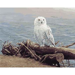 GХ5029 картины по номерам  Белая сова на бревне  40х50 см