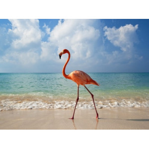 12171 Алмазная мозаика Фламинго на берегу , 40х50 см
