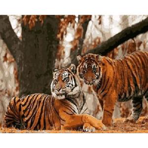 GX 4443 Пара тигров картины по номерам на холсте 40х50 см