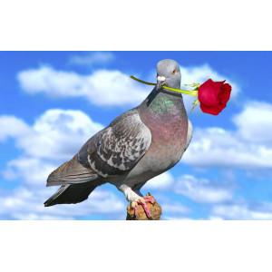 """GХ8461 """"Голубь с розой"""", 40х50 см"""
