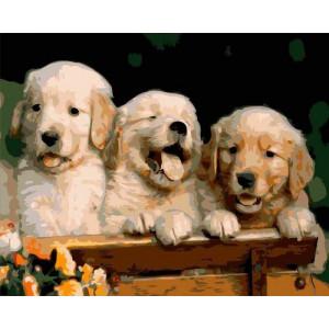 GX6251 Три щенка 40х50 купить в Омске недорого