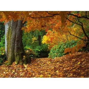 """GX8778 """"Осенний лес"""", 40х50 см"""