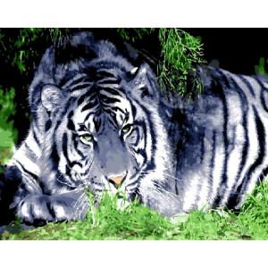 GX8952 Белый тигр 40х50