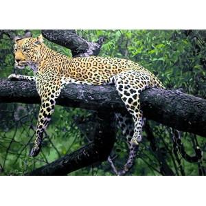 GX 3203 Уставший гепард купить в Омске недорого